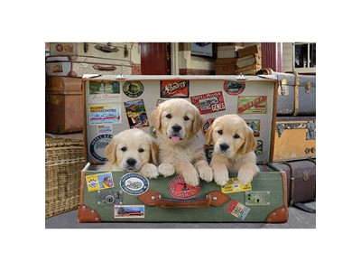 Puppies in the Luggage