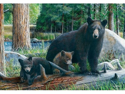 Bears New Discoveries