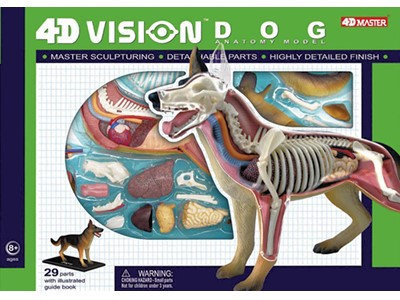 Anatomi 4D Vision Dog model