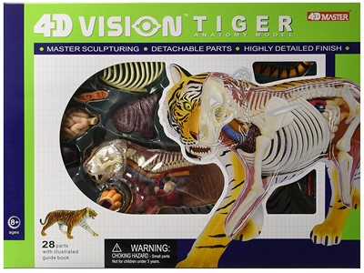 Anatomi 4D Vision Tiger model